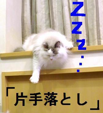 のどごし寝.JPG
