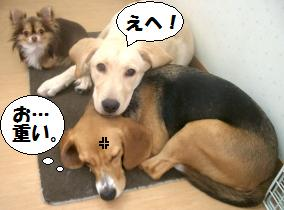 ポンタ枕.JPG