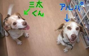 三太とアルパ.JPG